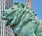 Chicago AIC Lion Thumbnail