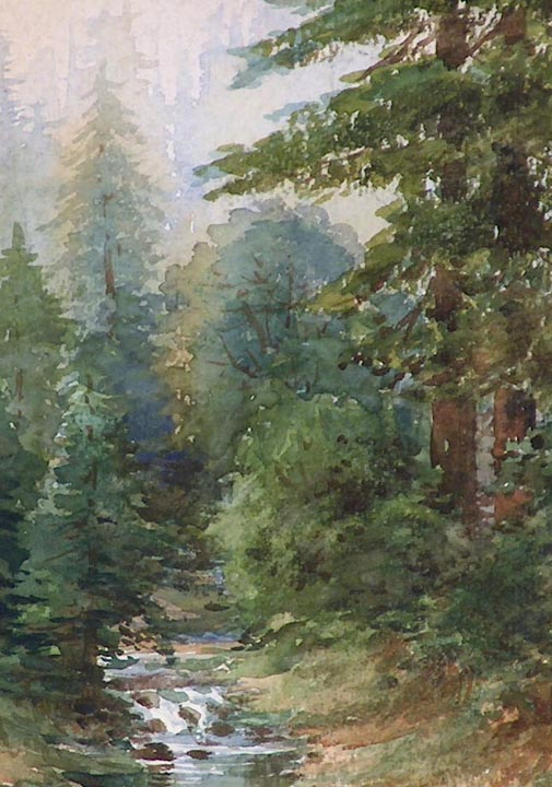 Marius Schmidt California Redwoods and Stream closeup