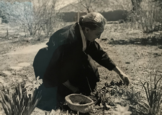 Georgia Picking Angelica for the Salad, 1960 Tony Vaccaro, age 73
