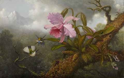 Martin Johnson Heade Cattleya Orchid, Two Hummingbirds and a Beetle ca. 1875-1890