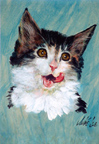 Jake Lee Cat Thumbnail