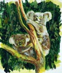 Jake Lee Koalas Thumbnail