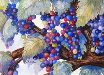 Grapes by Diane Luiz