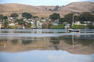 Diane Perry Bodega Bay Calm Waters