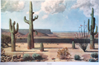 James Guilford Swinnerton Desert Cacti Print Thumb