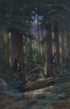 Manuel Valencia Redwood Forest Midszied Thumbnail